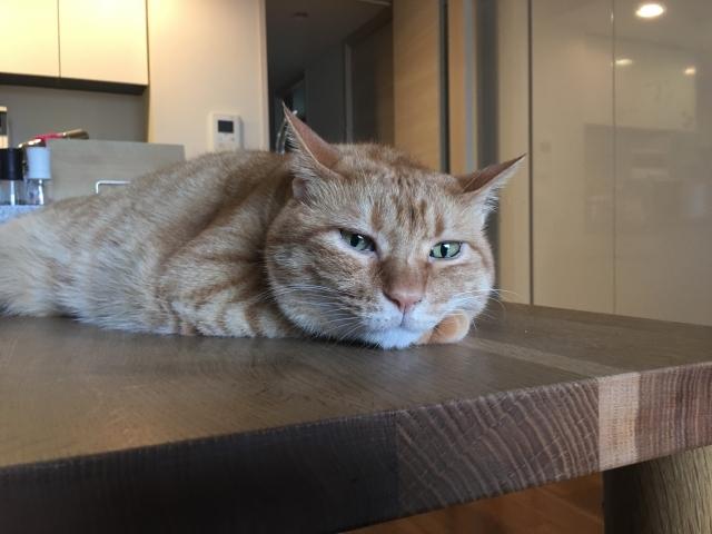 アパートなどの賃貸物件で猫を飼う!夏場のお留守番対策