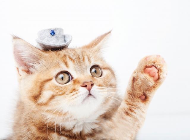 アパート住まいでも猫を飼いたい!鳴き声対策・猫用アパート