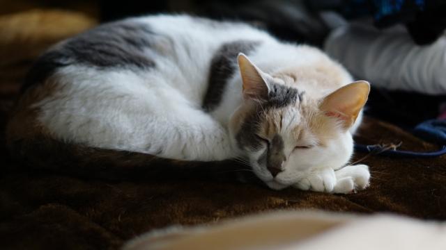 アパートがペット禁止それでも猫を飼ったときのトラブルは?