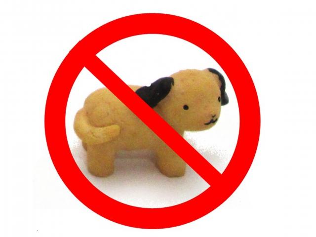 アパートでペットを内緒で飼育するのはやめて!その訳とは?