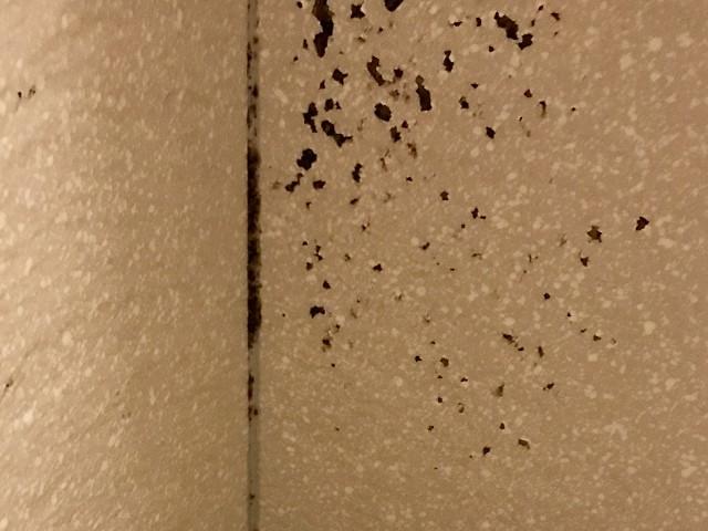 アパートの壁紙にカビが生えてしまった!原因と対策をご紹介