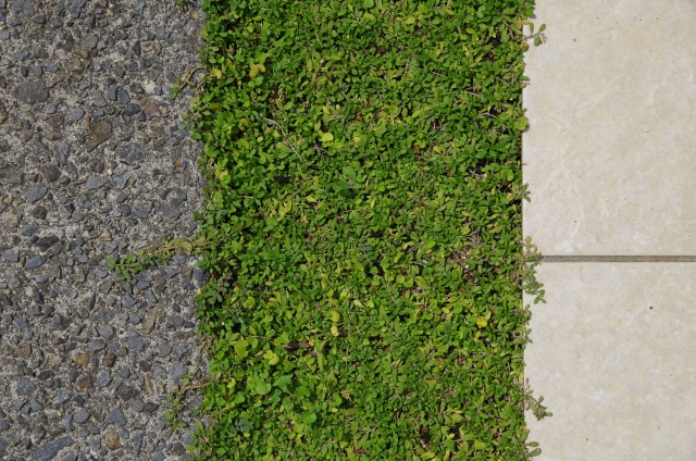駐車場の目地には何を入れる?《芝生・砂利・レンガ・玉竜》