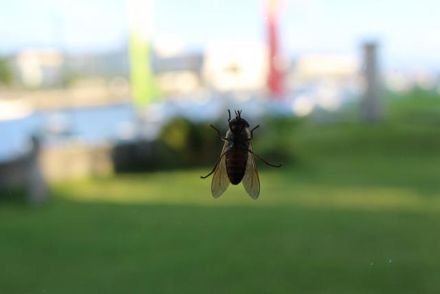 窓からの虫の侵入を防ぐ!すぐできる簡単な対策方法をご紹介
